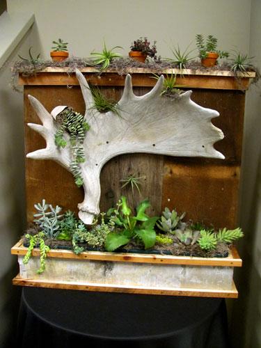 Succulents-1-edited